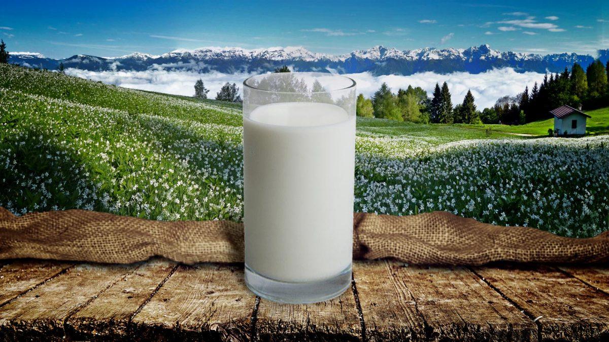 Filiera Corta Valbelluna - Latte-bio-di-montagna-e-alta-qualità